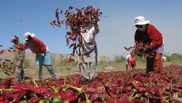 Las regiones que registraron un mayor desembolso en pequeños agricultores con un préstamo por primera vez fueron: Puno, Huánuco y Arequipa. (Foto: GEC)