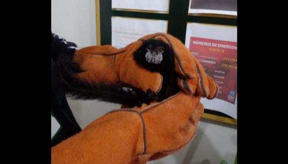 Cajamarca: rescatan especie de 'mono pichico' que era ofertado en redes sociales