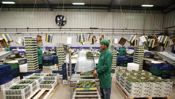 En el caso de la palta, Perú exportó el fruto por US$ 116 millones en marzo (un crecimiento de 225%). (Foto: GEC)