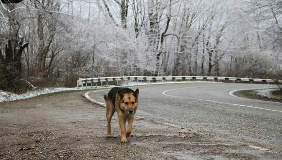 Un perro de China recorrió 60 kilómetros para volver a reunirse con su familia. (Foto: Referencial / Pixabay)