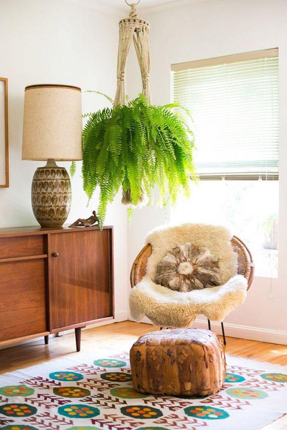 Si lo pones en una maceta colgante, quedará espectacular en tu sala. (Foto: Pinterest Guia de Jardinería)