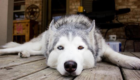 La dueña del can ha explicado que ya la ha acompañado a otros empleos. (Referencial/Getty Images)
