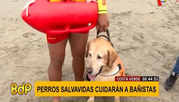 'Ruso' es un perro de raza Labrador que ayudará este verano en las labores de rescate en las playas de la Costa Verde. (Foto: Buenos Días Perú)