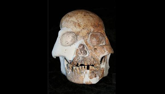 Este es el cráneo del ser que habría convivido con los humanos modernos. (Darren Curnoe)