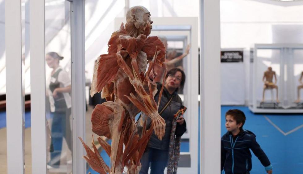 Exposición de cuerpos humanos reales . (M&M Asociados)