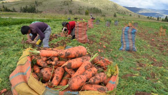 El aumento del sector agropecuario fue impulsado por una mayor producción del subsector agrícola (4.2%) y del subsector pecuario (4.5%). (Foto: GEC)