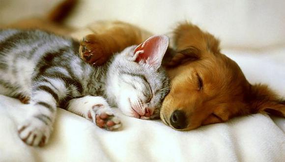 No dejes la salud de tu mascota en manos de un empírico. (Internet)