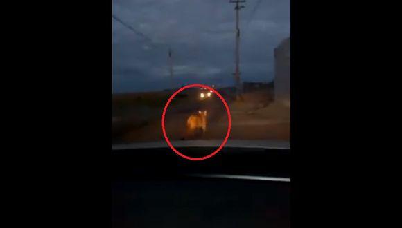 Un video publicado en la cuenta de Facebook El Informativo muestra cuando el puma merodeaba por la avenida Primavera. (Captura: Facebook/ElInformativo)