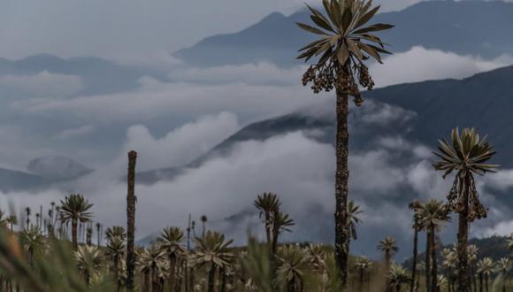 Tres razones por lo que empresas deben apostar por el clima y la naturaleza en los negocioss / Parques Nacionales Naturales de Colombia.