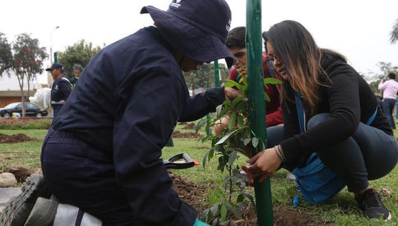 Las especies disponibles para adopción son: tecoma, tulipán, calistemo, álamo, tipa, jacarandá, ponciana, molle serrano y molle costeño. (Foto: Municipalidad de San Borja)