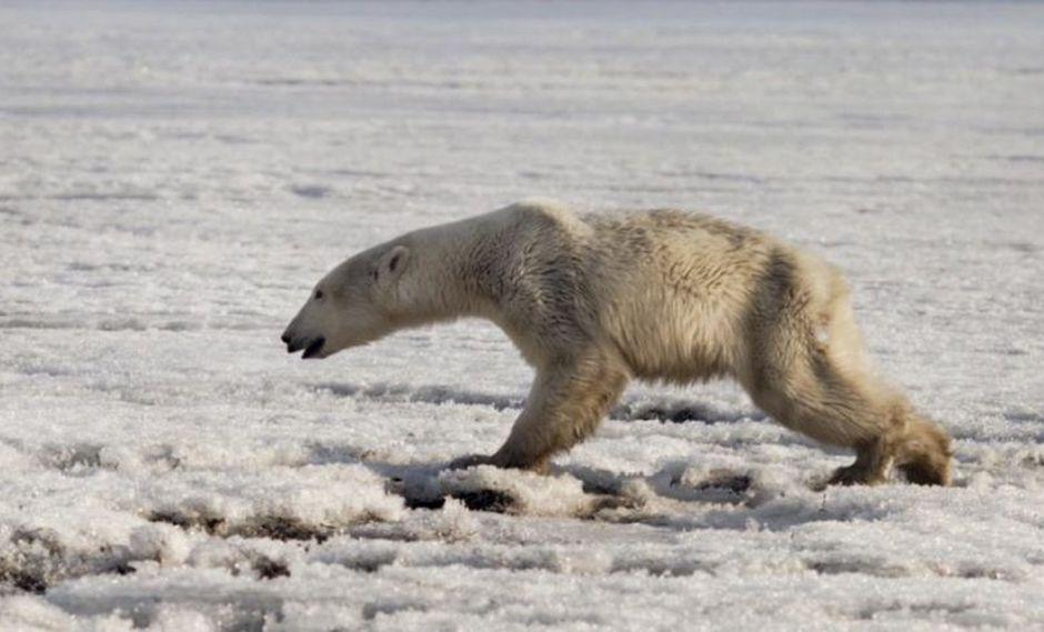ONU   Las Naciones Unidas advierten que los humanos aceleran la extinción de otras especies. (AP)