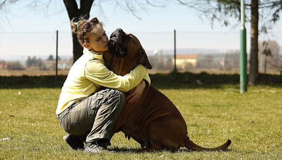 Salud21: Cómo convivir con su mascota y con alergia. (Pixabay)