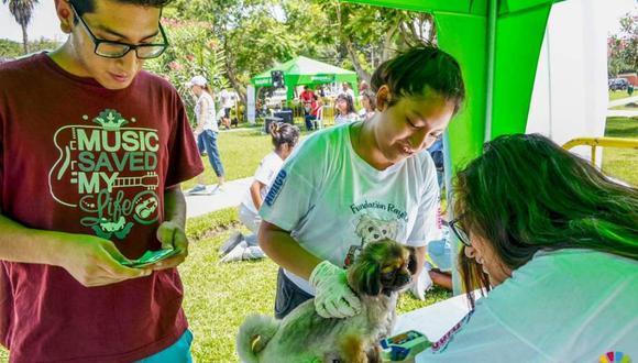 Esta campaña contará con la presencia de veterinarios experimentados que brindarán los servicios de desparasitación, aplicación antipulgas y más. (Foto: Municipalidad de Surquillo/Fundación Rayito)