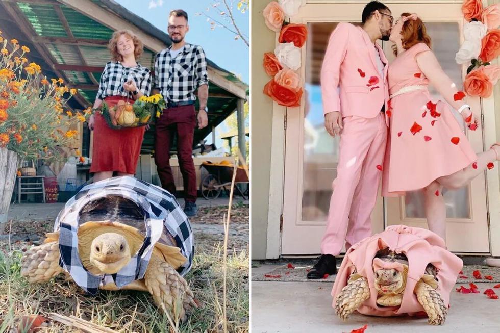Ethel es una tortuga sulcata de casi 10 kilos de pesos y 4 años de edad que es una sensación en las redes sociales debido a sus estilizados atuendos. (Foto: etheltheglamourtort en Instagram)