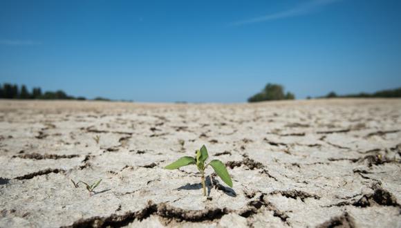 Una parte seca del lecho del río Loira en Montjean-sur-Loire, el oeste de Francia, debido a que las condiciones de sequía prevalecen en gran parte de Europa occidental, que sufre una nueva ola de calor. (Foto: AFP)