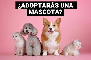 ¿Qué debo hacer si voy a adoptar una mascota por primera vez?