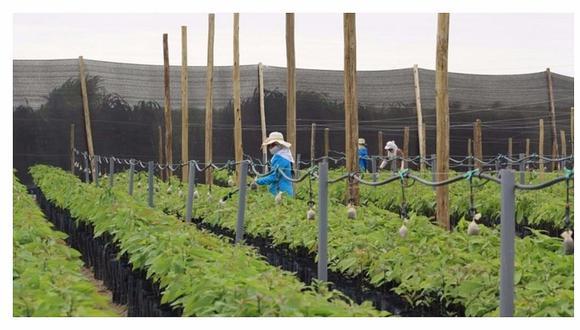El laboralista César Puntriano refirió que ya venció el plazo fijado en la propia norma agraria para su reglamentación a fines de enero.