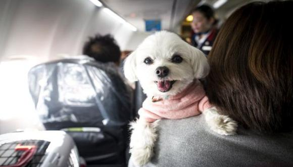 Estas son las recomendaciones que debes seguir si deseas viajar con tu mascota en avión. (Getty Images)
