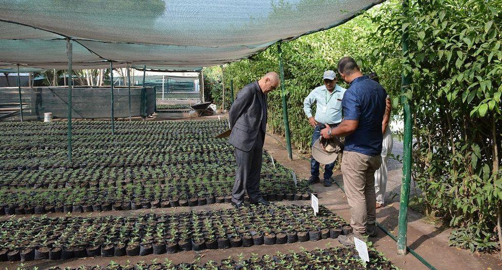 En los viveros de Surco están listos más de 600 molles, 400 gravileas, 400 meijó y 4 mil especies de guaranguay para ser colocados.(Foto: Difusión)