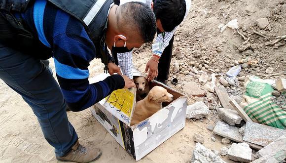 Animales son abandonados por ciudadanos irresponsables. (Municipalidad de Surco)