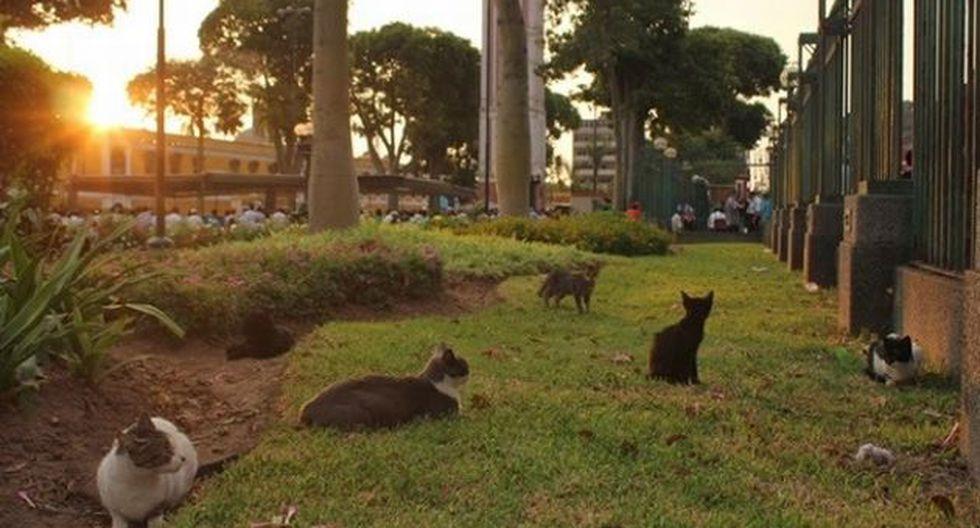Gatos han sido abandonados por sus dueños en el Parque Universitario. (Trome)