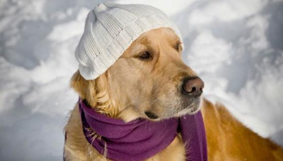 El frío intenso desencadena que estos animalitos presenten dificultades para desplazarse. (Internet)