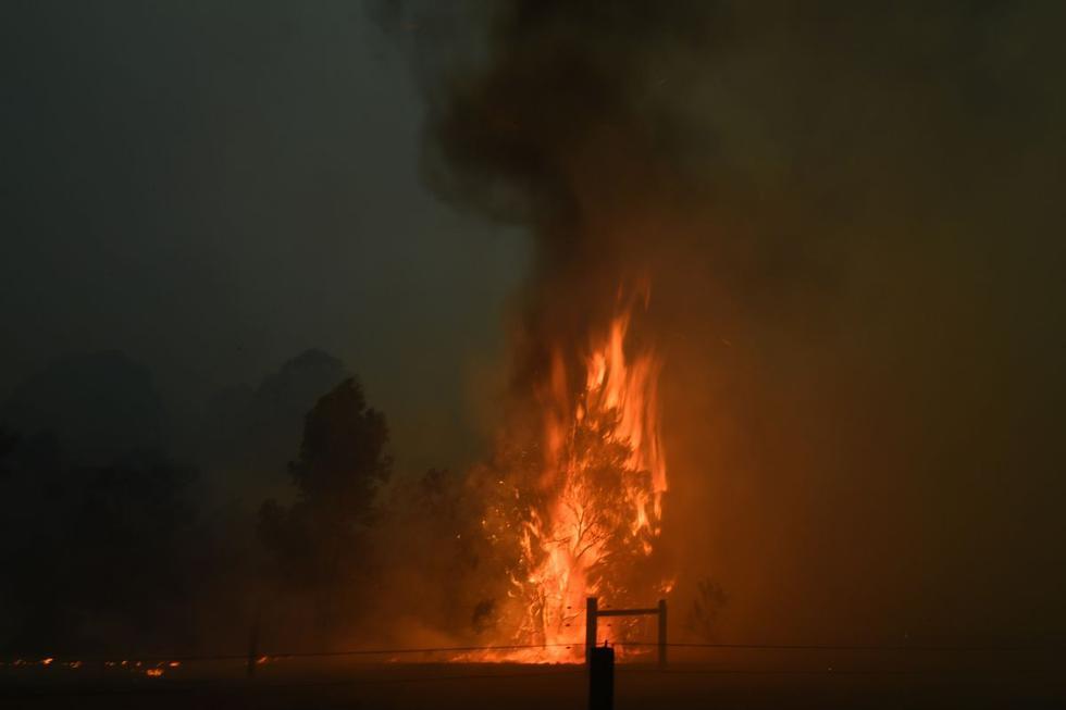 Un árbol arde en una propiedad residencial cuando los incendios forestales azotaron el área alrededor de la ciudad de Nowra en el estado australiano de Nueva Gales del Sur. (AFP)