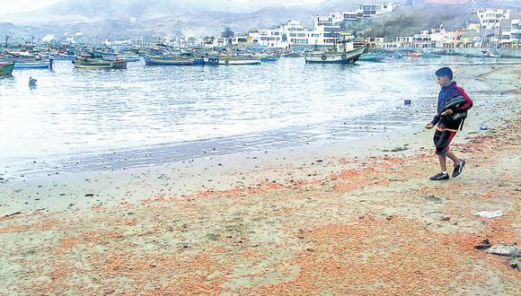 ALERTA. El calentamiento de las aguas causó la muerte de miles de crustáceos en la costa peruana. (USI)