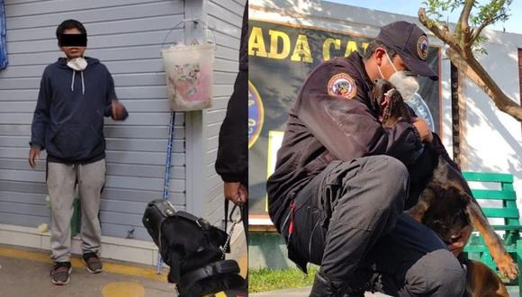 'Princesa' es uno de los perros de la Brigada Canina de la Municipalidad de Surco. (Difusión)