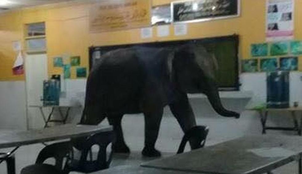 Ingreso de elefante causó pánico pero no generó accidentes. (Info Roadblock JPJ/POLIS)