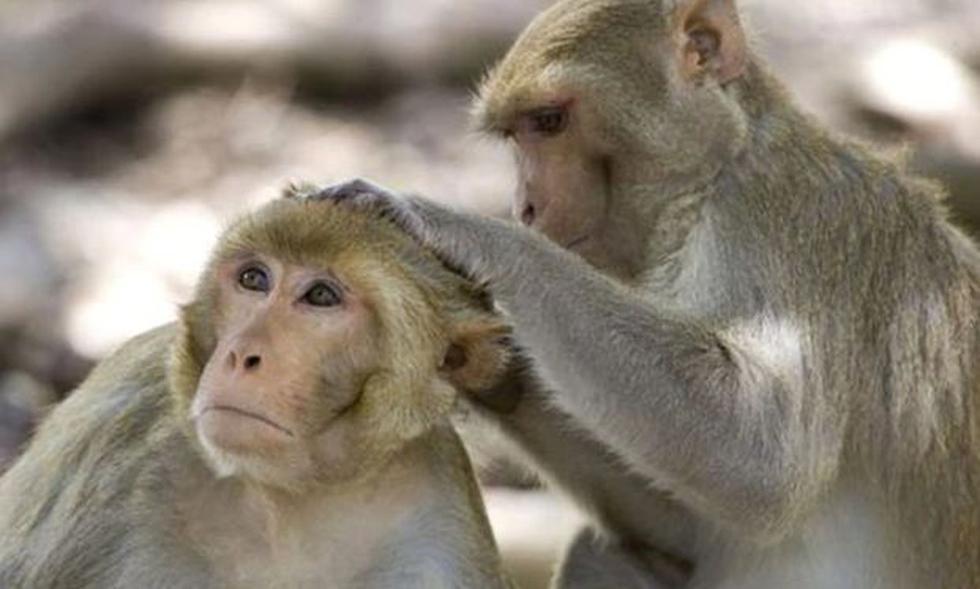 Universidad de Oxford anunció que su vacuna contra el coronavirus funcionó exitosamente en monos