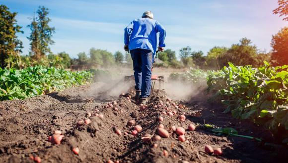 Como parte de sus políticas para generar empleo, en Perú Libre aseguran que promoverán aquellas actividades que, desde su punto de vista, tienen mayor capacidad para generar empleo como la agricultura y la industria. (Foto: iStock)