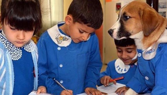 Findik es un alumno más y presta 'atención' a sus maestros en clase. | Foto: @nimetsoydan62