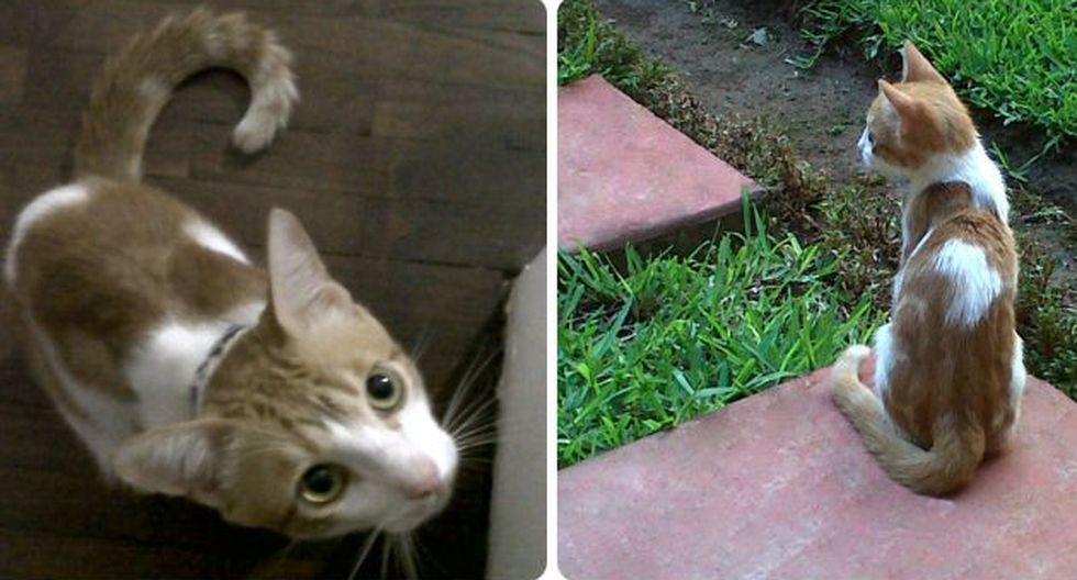 El gato es de color blanco y anaranjado.