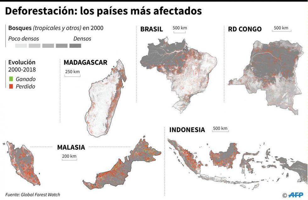 Deforestación: los países más afectados. (Foto: AFP)