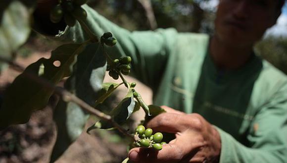 El café fue el producto que más creció entre enero y febrero del 2012. (Perú21)