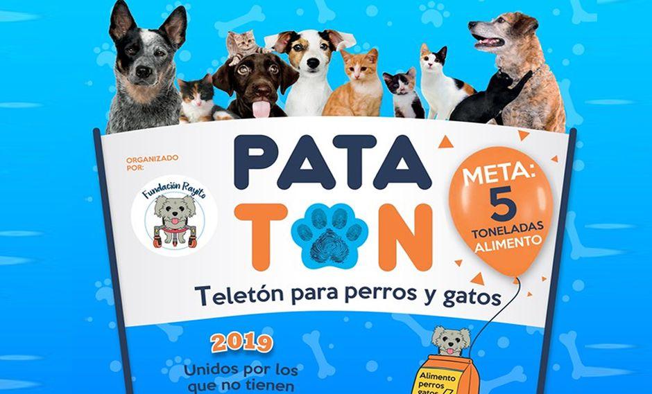 """Este domingo 5 de mayo se realizará la """"Patatón 2019"""", conocida como la 'Teletón' en favor de perros y gatos en estado de abandono. (Foto: Municipalidad de Surquillo)"""