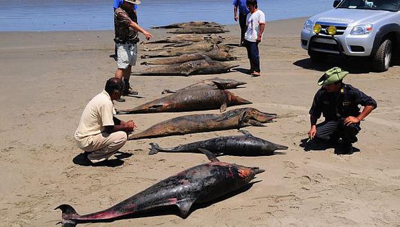Pesquería y envenenamiento fueron causas descartadas por los análisis. (USI)