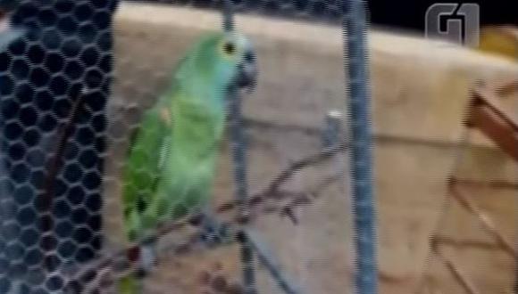 El pequeño animal fue transferido a un parque zoobotánico a la espera de ser liberado en unos dos o tres meses. (Captura)