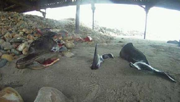La Libertad: Gran indignación por hallazgo de delfines mutilados. (ultimasnoticiasdiario.com)
