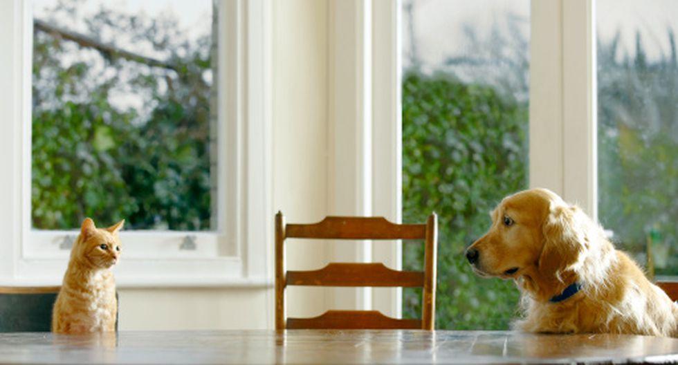 ¿Perros o gatos? Esta sería tu personalidad según qué mascota prefieres. (Getty)