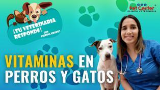 Vitaminas en perros y gatos
