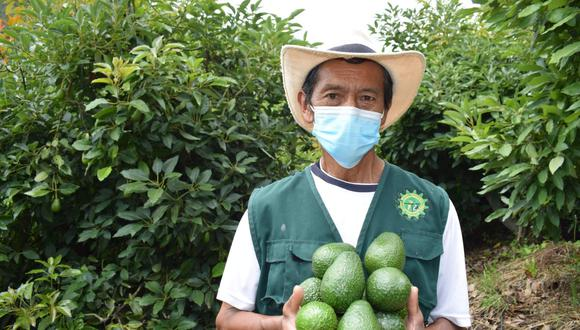 """""""Este 2021 esperamos exportar casi 470,000 TM de paltas, consolidando al país como el segundo exportador mundial después de México"""", señala el columnista."""