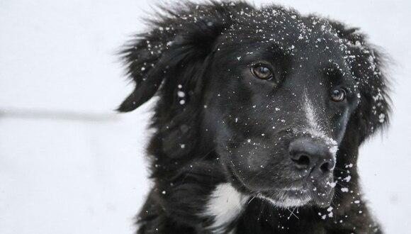 Un perro fue grabado deslizándose alegremente en la nieve y el momento cautivó a los amantes de las mascotas en las redes sociales. (Foto: Pixabay/Referencial)