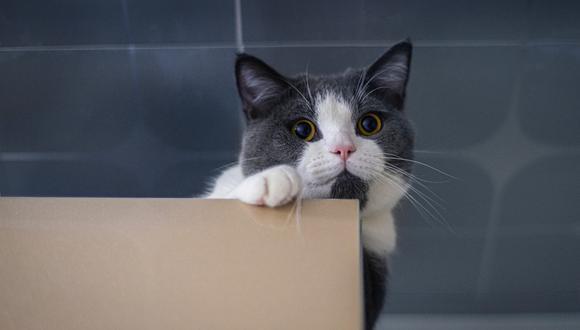 Un video viral muestra cómo un gatito es capaz de reírse como si fuera un humano.   Crédito: Pexels / Referencial