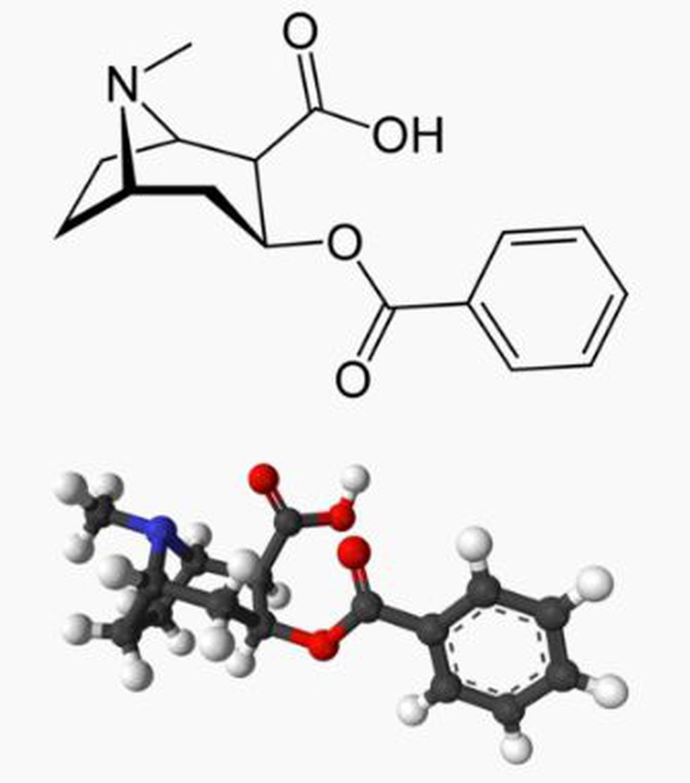 Benzoilecgonina