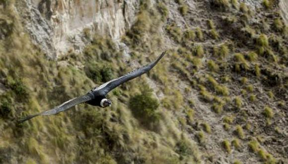 Las aves sobrevuelan el cañón de Mayobamba, en Lucanas, Ayacucho, en la mañana.