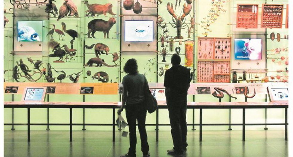 El museo de museos de de J. E. Bedoya. (USI)