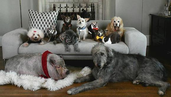Los perros conviven en un ambiente lleno de cariño junto a aves, felinos y hasta una cerdita llamada 'Bikini'. (Foto: Instagram @wolfgang2242)