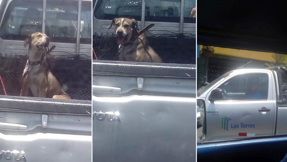 Maltrato animal: Conductor transporta a su perro en tolva bajo el ardiente sol. (Captura)